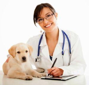 medico-veterinario-unsm